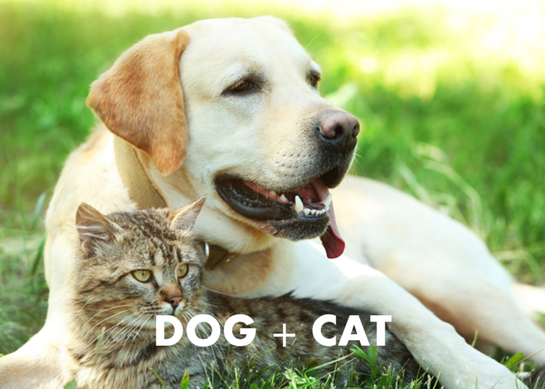 dog cat parasight system